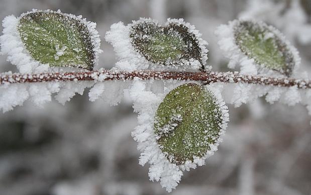 blad met ijs,sneeuw