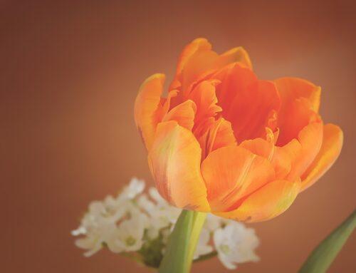 Blog: Forgiveness